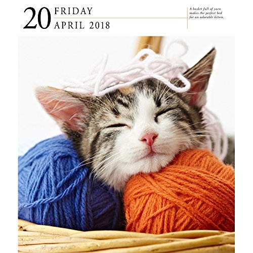 Cat 2018 Page-A-Day Gallery Calendar Photo #2