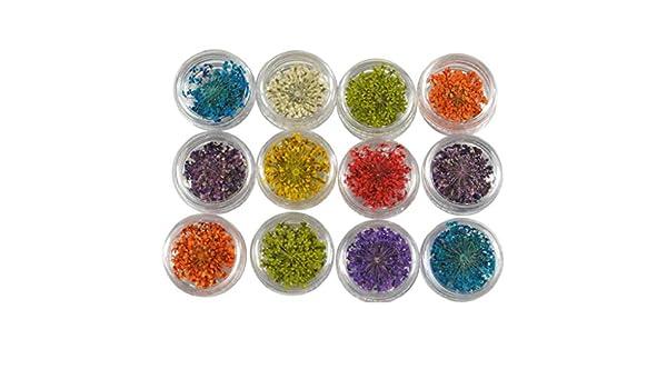 QUICKLYLY Uñas/Manicura-12 Colores 3D Decoración Real Seca Flor Seca Para Uñas De Gel De Acrílico Consejos De Arte Nail: Amazon.es: Belleza