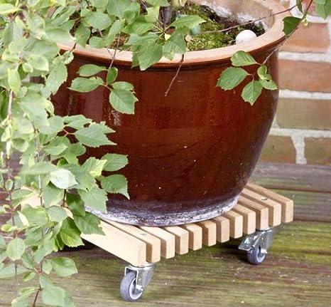 Livendor Macetero Roller Asinus, Planta Roller Estable de Solider Roble Ruedas: Amazon.es: Jardín