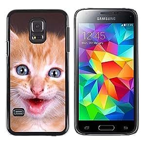 Be Good Phone Accessory // Dura Cáscara cubierta Protectora Caso Carcasa Funda de Protección para Samsung Galaxy S5 Mini, SM-G800, NOT S5 REGULAR! // American Shorthair Kitten Pet C