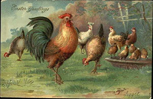 Roosters, hens and chicks in yard With Other Animals Original Vintage Postcard from CardCow Vintage Postcards