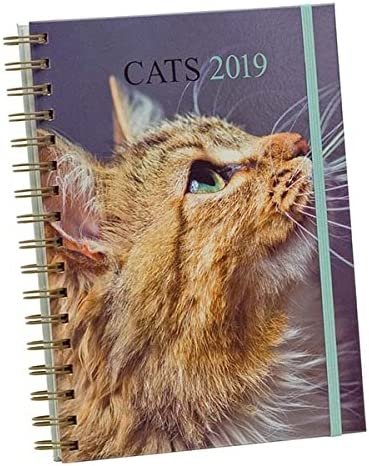 Draeger 72000160 agenda 18 x 22 cm gatos 2019: Amazon.es: Oficina y papelería