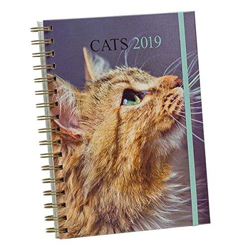 Draeger 72000160 agenda 18 x 22 cm gatos 2019: Amazon.es ...