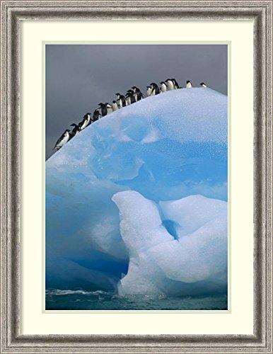 framed-art-print-adelie-penguin-group-resting-on-blue-antarctica-by-tui-de-roy