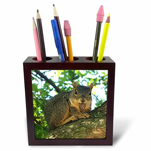 (3dRose ph_21041_1 Happy Squirrel Tile Pen Holder, 5-Inch)