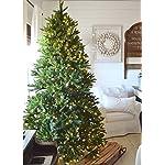 KING-OF-CHRISTMAS-King-Fraser-Fir-Quick-Shape-Christmas-Tree