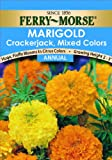 Ferry-Morse 1079 Marigold Annual Flower Seeds, Crackerjack Mixed Color (400 Milligram Packet)