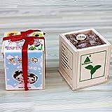 Angelwing Magic Bean Seed Message Word Wooden Mini Bonsai Desktop Plants Growing Science Kit