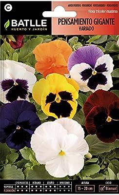 Semillas de Flores - Pensamiento Gigante variado - Batlle: Amazon ...