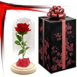 Shire Beauty and The Beast Artificial Red Rose: Preservered in Glass Dome with Gift Box for Wedding Living Room Table Home Garden Decoration, Champagne. Ideal Gift for Mothers Day, Valentine.