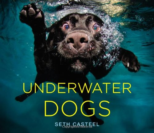 Image result for underwater dogs