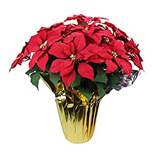 Northlight 28″ Red Artificial Christmas Poinsettia with Gold Wrapped Pot