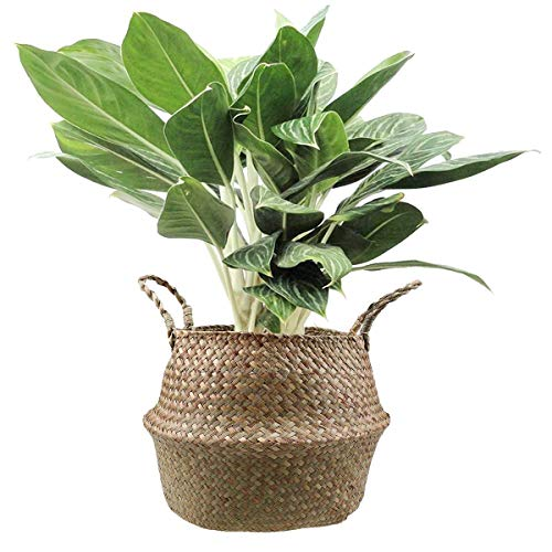 CUPID Natural Seagrass Belly Basket Panier Storage Plant Pot Collapsible Nursery Laundry Tote Bag with Handles (Medium)