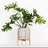 RISEON Mid Century Modern Plant Stand, Wood Indoor Flower Pot Holder Display Potted Rack Rustic,Large Wooden Floor Planter Stand (Planter Not Included) (Large, Natural)
