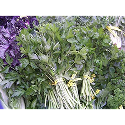 Toyensnow - Parsley, HERB and Garnish (2820 Seeds) : Garden & Outdoor