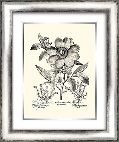 er Peony I 20x24 Silver Contemporary Wood Framed and Double Matted Art Print by Besler, Basilius ()