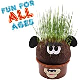 Grass Head - Funny Fast Growing Grass Head Learning Toy for Kids by AvoSeedo (Mixed Comic Heads)