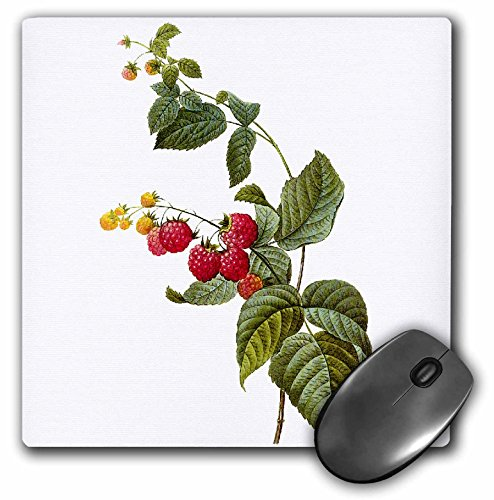 Dooni Designs Redoute Fruits and Flowers - Redoute Vintage Watercolor Fruit Raspberry Plant Rubus Sp - MousePad (mp_106861_1)