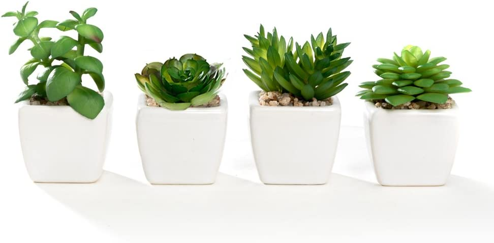 Nattol Small Artificial Succulent Plant Potted in White Ceramic Pots for Home Decor, Set of 4: Home & Kitchen
