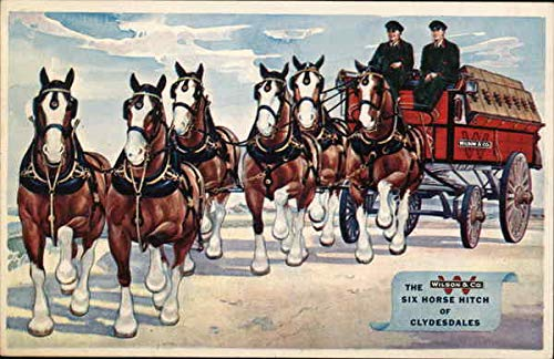 - Wilson & Co. The Six Horse Hitch of Clydesdales Chicago, Illinois Original Vintage Postcard