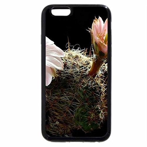 iPhone 6S / iPhone 6 Case (Black) Rebutia-Leucanthema