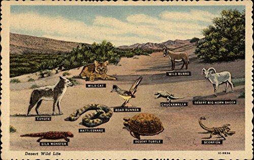 Desert Wild Life Other Animals Original Vintage Postcard from CardCow Vintage Postcards
