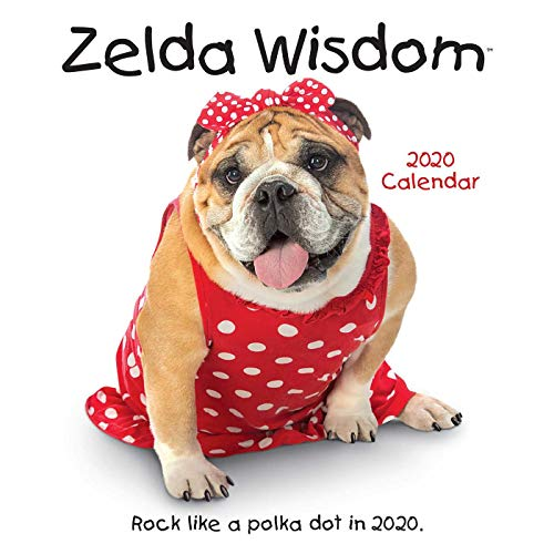 Zelda Cat Costume (Zelda Wisdom 2020 Wall)