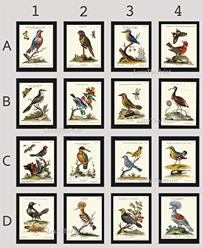 Bird Print Set of 16 Prints Antique Beautiful Kingfisher Ibis Hoopoe Red Flowers Butterfly Dragonfly Tree Branch Bee Green Leaves Home Room Decor Wall Art Unframed CTB
