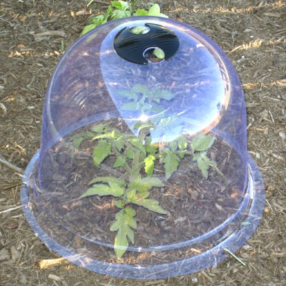 Medium Garden Cloche Plant Cover - Elegant Bell Cloche Protects Plants From Frost and Plants Grow Stronger - Provides Cold Frame & Greenhouse Warmth by TheGardenCloche.com