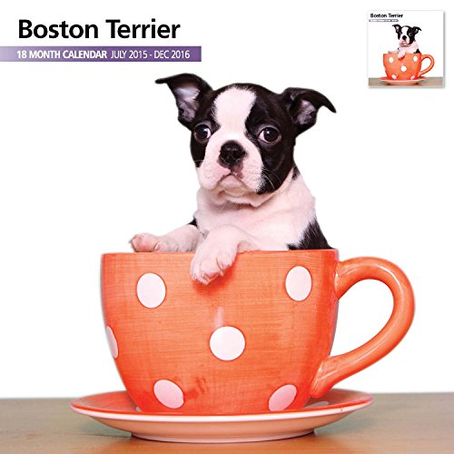 Boston Terrier 18 Month 2016 Wall Calendar
