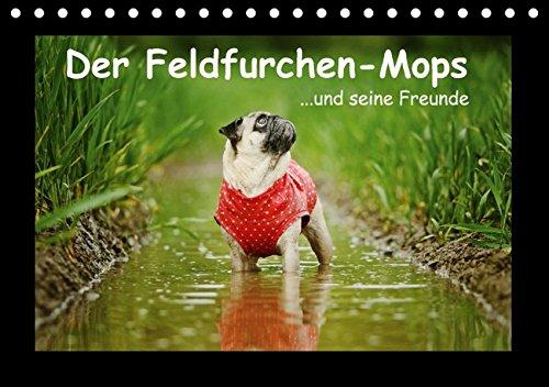 Der Feldfurchen-Mops (Tischkalender 2016 DIN A5 quer): ...und seine Freunde (Monatskalender, 14 Seiten ) (CALVENDO Tiere)