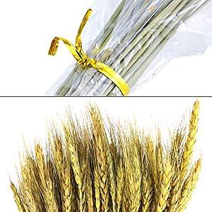BeautyMood 60PCS Golden Dried Natural Wheat Sheave Bundle, Wheat Bundle Dry Grass Bouquet Premium Fall Arrangements DIY Home Kitchen Table Wedding Flower Bouquet Centerpieces Decorative 4