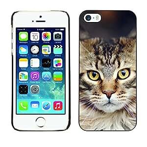 Vórtex carcasa funda accesorio - Maine coon bosque noruegas Apple iPhone 5/5S - cat