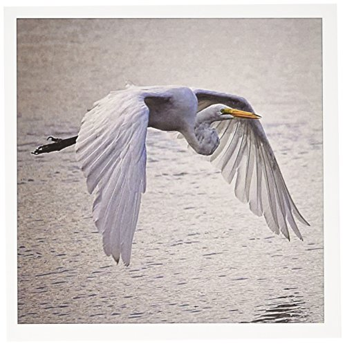 (3dRose A Graceful heron with Wings Outstretched Greeting Cards, 6