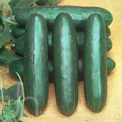 Talladega Cucumber Seeds - Extra early and extra heavy yields!! A Nice Slicer!! (50 - Seeds) : Garden & Outdoor