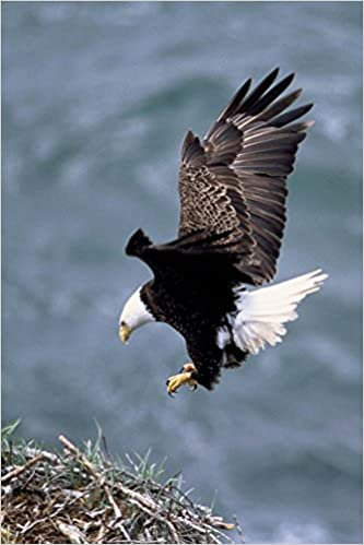 Book Eagle Getting Ready to Land Bird Journal: 150 Page Lined Notebook/Diary