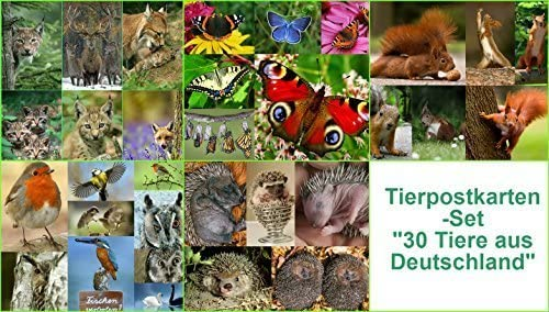 Edition Colibri Lot de 30 cartes postales Motifs animaux dAllemagne
