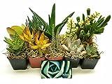 Fat Plants San Diego Succulent Plants (10)