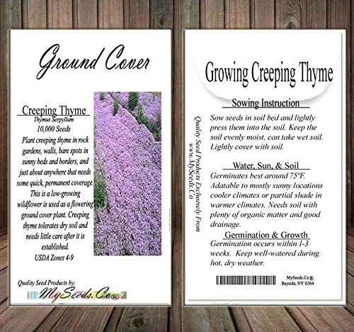 Creeping Thyme Herb (875,000+) Seeds - Thymus Serpyllum - Excellent Ground Cover - Non-GMO Seeds by MySeeds.Co (Creeping Thyme 4oz - 4,000 sq ft) by MySeeds.Co - Flower Seeds by the LB (Image #3)