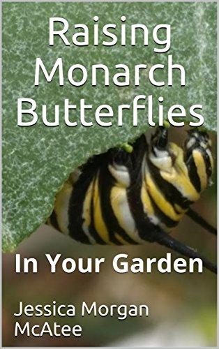 Raising Monarch Butterflies: In Your Garden (Best Milkweed For Monarchs)