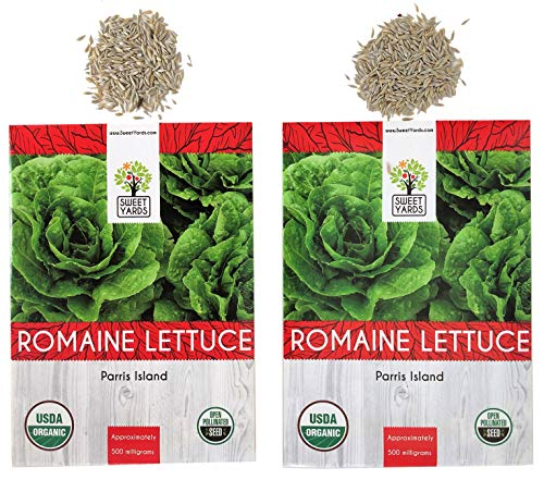 Lettuce Parris Island - Organic Romaine Lettuce (Parris Island) Seeds - 2 Seed Packets! - Over 1000 Open Pollinated Non-GMO USDA Organic Seeds