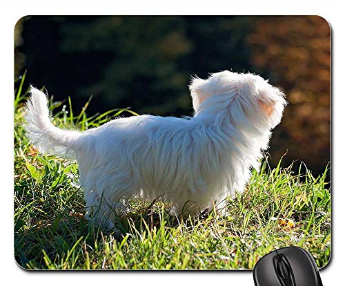 Mouse Pad - Dog Puppy White Out Meadow Grass Nature Baby Dog