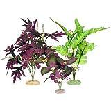 Vibran-Sea So. American Flowering Cluster Aquarium Plant Assortment