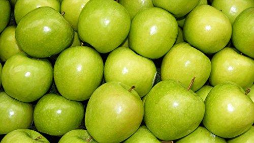 1 Granny Smith Apple Tree - 3 to 4 ()