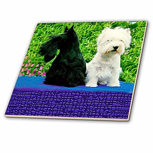 (Dogs Scottie And Westie - Scottie And Westie - 8 Inch Ceramic Tile (ct_506_3))