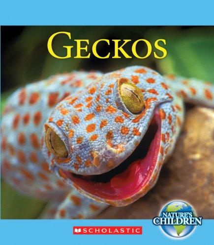 Geckos (Nature