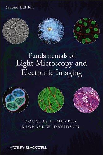 Light Path In A Microscope
