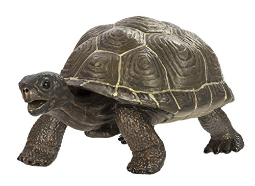 (Safari Ltd  Incredible Creatures Tortoise Baby)