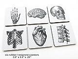 Human Anatomy square Coasters Gift neoprene
