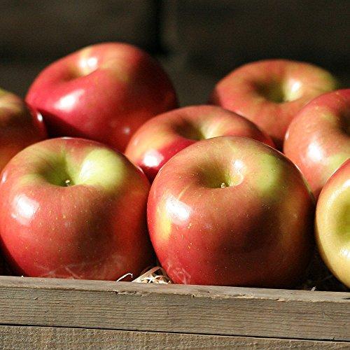 Fuji Apples - 7 lbs - The Fruit Company
